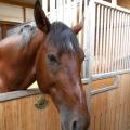 Salonul Calului - Foto 13 din 23