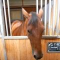 Salonul Calului - Foto 14 din 23