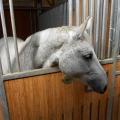 Salonul Calului - Foto 15 din 23
