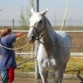 Salonul Calului - Foto 16 din 23