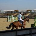 Salonul Calului - Foto 20 din 23