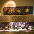 Concept-store-urile reinventeaza business-ul autohton - Foto 8 din 12