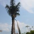 Calator prin Brazilia - Foto 13 din 52