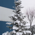 Birouri de sarbatoare: cum s-au pregatit companiile pentru Craciun - Foto 29