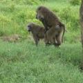 Vacanta in Kenya - Foto 2 din 20