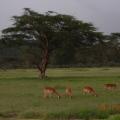 Vacanta in Kenya - Foto 7 din 20