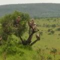 Vacanta in Kenya - Foto 9 din 20