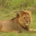 Vacanta in Kenya - Foto 10 din 20