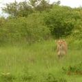 Vacanta in Kenya - Foto 11 din 20