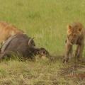 Vacanta in Kenya - Foto 18 din 20