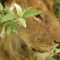 Vacanta in Kenya - Foto 19 din 20
