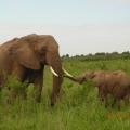 Vacanta in Kenya - Foto 20 din 20