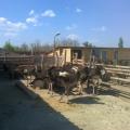 Un fermier din Buzau a investit 50.000 de euro intr-o ferma cu struti - Foto 3