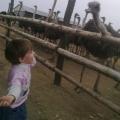 Un fermier din Buzau a investit 50.000 de euro intr-o ferma cu struti - Foto 5