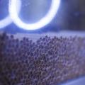 De aici pleaca zilnic 200 de milioane de tigarete: cum arata fabrica Philip Morris din Berlin - Foto 3