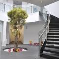 Un sediu care transmite energie: cum se lucreaza in jurul unui copac - Foto 18