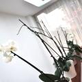 Birou de companie Image PR - Foto 35 din 73
