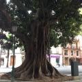 Valencia - Foto 45 din 50