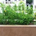 (P) Terase si balcoane elegante amenajate cu travertin. Testeaza pe www.hailacasa.ro! Citeste mai m - Foto 3 din 4