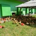 Agricola Bacau - Foto 13 din 34