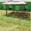 Agricola Bacau - Foto 14 din 34