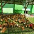 Agricola Bacau - Foto 15 din 34