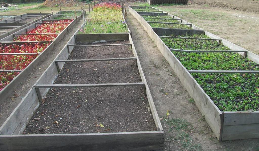 De unde provin si cat costa aranjamentele florale recent instalate in Sectorul 6 - Foto 1 din 4