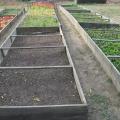 De unde provin si cat costa aranjamentele florale recent instalate in Sectorul 6 - Foto 1