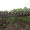 De unde provin si cat costa aranjamentele florale recent instalate in Sectorul 6 - Foto 2