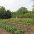 De unde provin si cat costa aranjamentele florale recent instalate in Sectorul 6 - Foto 3