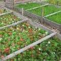 De unde provin si cat costa aranjamentele florale recent instalate in Sectorul 6 - Foto 4