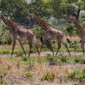 Pe bicicleta in Africa - Foto 37 din 44