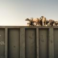 Calatorie in Mauritania - Foto 8 din 21