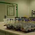 FOTO  Cum arata si cum sunt stocate probele in cea mai mare banca de celule stem din Europa - Foto 4
