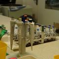 FOTO  Cum arata si cum sunt stocate probele in cea mai mare banca de celule stem din Europa - Foto 10