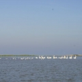 Delta Dunarii, vazuta prin obiectivele noilor camere foto NEX-5 si NEX-3 de la Sony - Foto 2