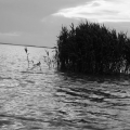 Delta Dunarii, vazuta prin obiectivele noilor camere foto NEX-5 si NEX-3 de la Sony - Foto 3