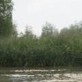 Delta Dunarii, vazuta prin obiectivele noilor camere foto NEX-5 si NEX-3 de la Sony - Foto 4