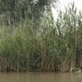 Delta Dunarii, vazuta prin camerele foto NEX-5 si NEX-3 - Foto 6 din 26