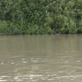 Delta Dunarii, vazuta prin obiectivele noilor camere foto NEX-5 si NEX-3 de la Sony - Foto 7