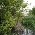 Delta Dunarii, vazuta prin obiectivele noilor camere foto NEX-5 si NEX-3 de la Sony - Foto 12