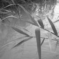 Delta Dunarii, vazuta prin obiectivele noilor camere foto NEX-5 si NEX-3 de la Sony - Foto 14