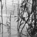 Delta Dunarii, vazuta prin obiectivele noilor camere foto NEX-5 si NEX-3 de la Sony - Foto 15