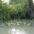 Delta Dunarii, vazuta prin obiectivele noilor camere foto NEX-5 si NEX-3 de la Sony - Foto 22