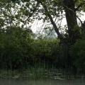 Delta Dunarii, vazuta prin obiectivele noilor camere foto NEX-5 si NEX-3 de la Sony - Foto 23