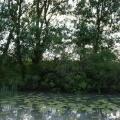 Delta Dunarii, vazuta prin camerele foto NEX-5 si NEX-3 - Foto 24 din 26