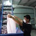 Vezi cum sunt distruse tigari in valoare de 1 mil. euro - Foto 12 din 22