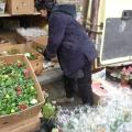 1 Martie in Piata de Flori (Bucuresti) - Foto 4 din 8