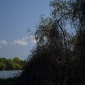 Fotografii din Delta cu Nikon D5100 - Foto 9 din 20