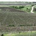 Crama LacertA Winery - Foto 8 din 10